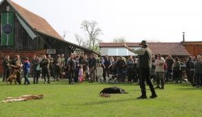 Jagdhundepräsentation für Jungjäger